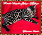 Marie Bengals Jaguar Heritage ~ Phtograph by Marie Bengals