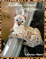 Paparazzi Bengals ~BengalVision On The Horizon Ferrari
